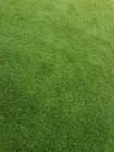 Sztuczna trawa Havanna (3)