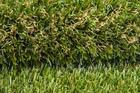 Sztuczna trawa Roma Verde (3)