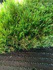 Sztuczna trawa Perfection (6)